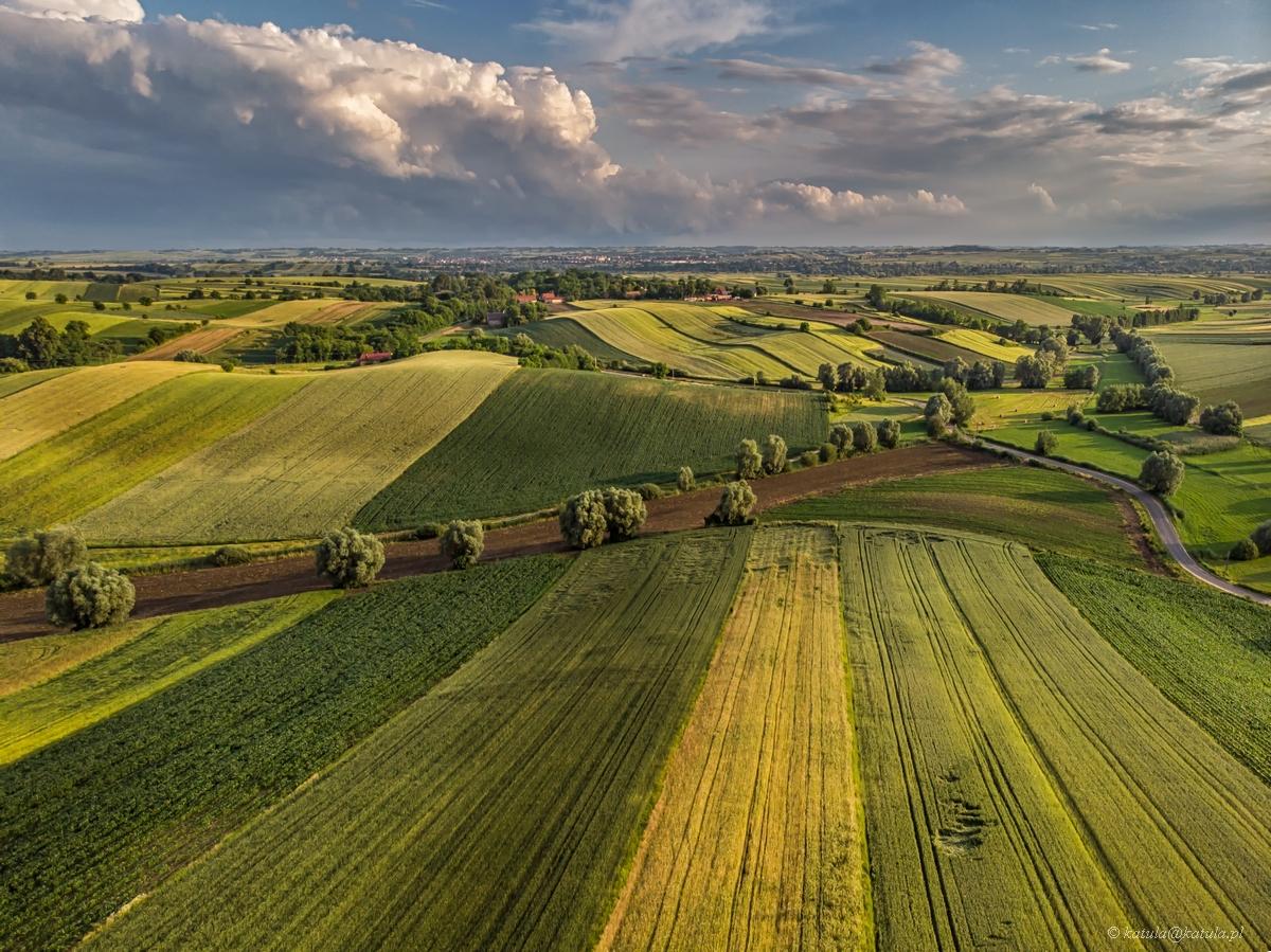 ponidziańskie czerwcowe pola